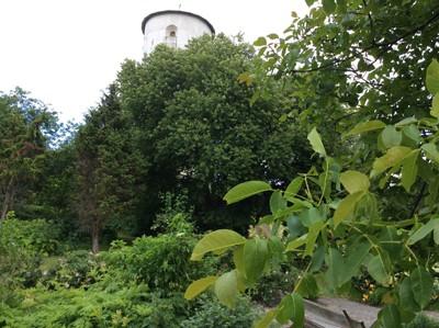 Valnötsträd